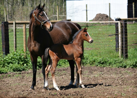 Foal by Hard Spun out of Sweet Fourty