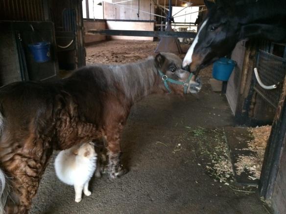 Anelina and Sundance the mini horse